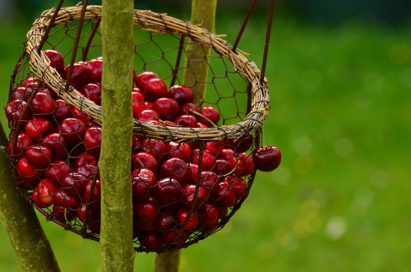 national cherry festival is in traverse city michigan